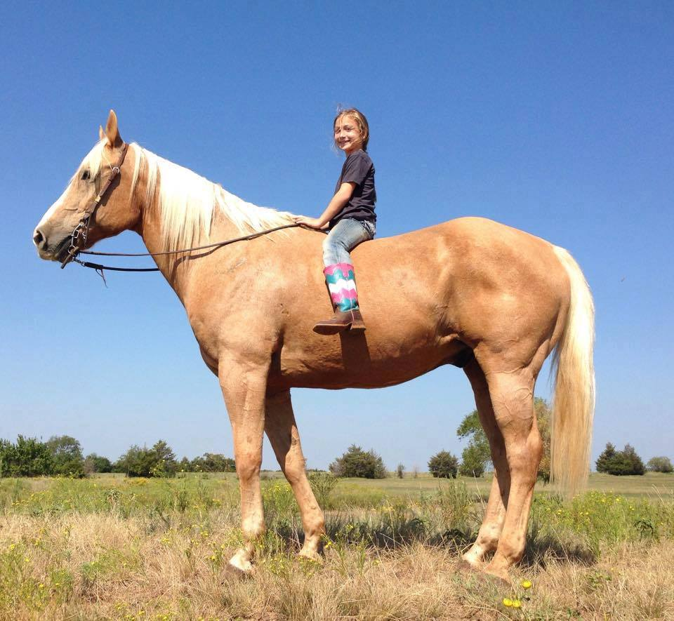 Quarter Horse With Exceptional All Round Qualities.