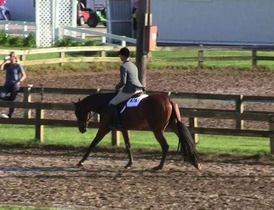 Beautiful, coming 3yo, bay mare by AYA for sale