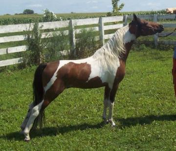 ASPC Hall OF Fame Stallion