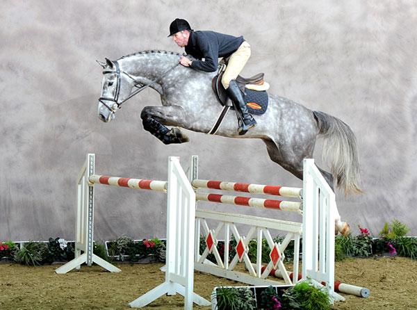 Smart Unicorn Dutch Warmblood Jumper For Everyone