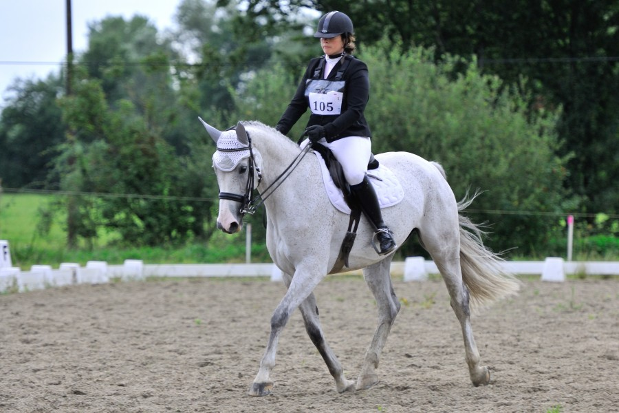 Gift of BWP Mare 11 years old for CSO / Leisure / Dress