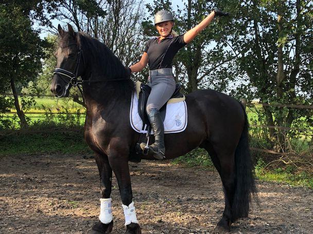 fresain horse
