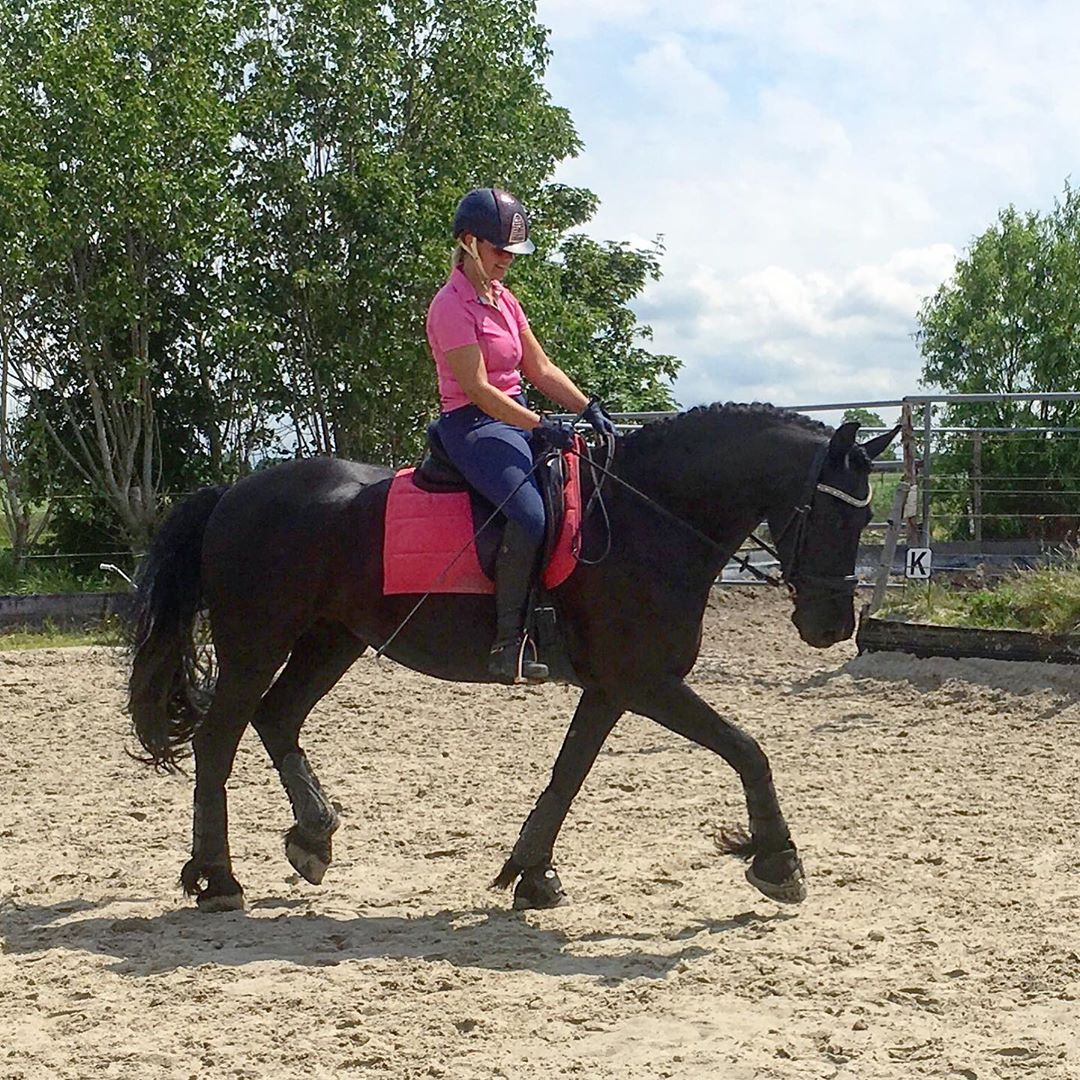 ***Six year old Gorgeous  Register Friesian Horse