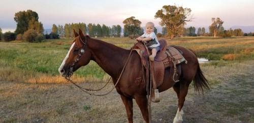 10 year old all around gelding  Kids Safe