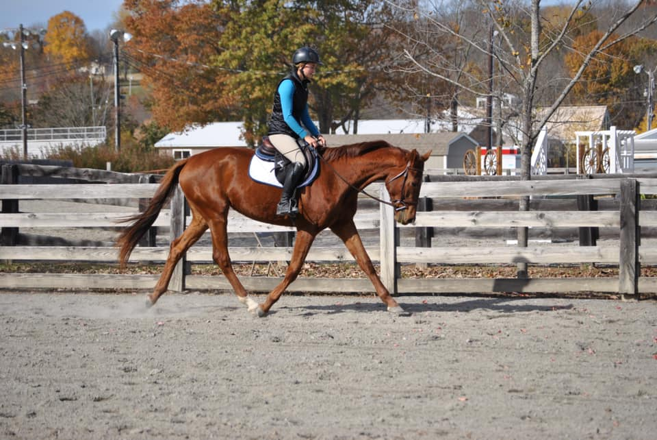 Warmblood Filly with all the Beauty AND Brains!