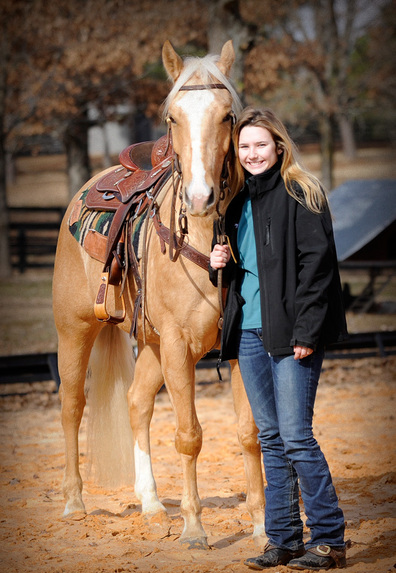 American Quiet Trail/Pleasure Gelding Palomino Horse