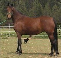 Beautiful Bay Mare