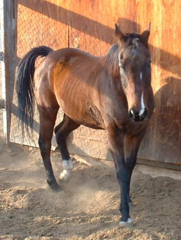 Ranch Horse needs a Home