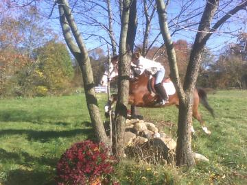 Athletic Gelding For Sale