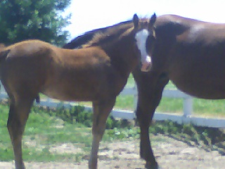 For Sale 2008 Pale Face Jose X Dry Jewel