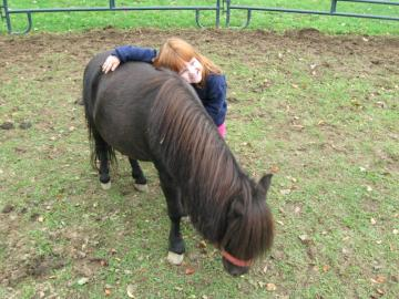 Miniature Horse, kid safe, visits schools.
