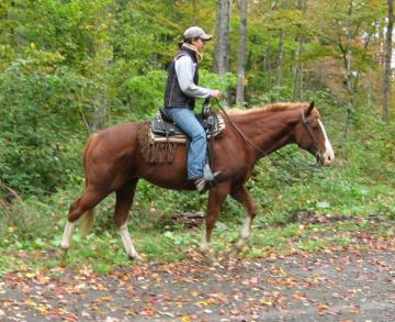Solid, Steady and Confident Trail Horse