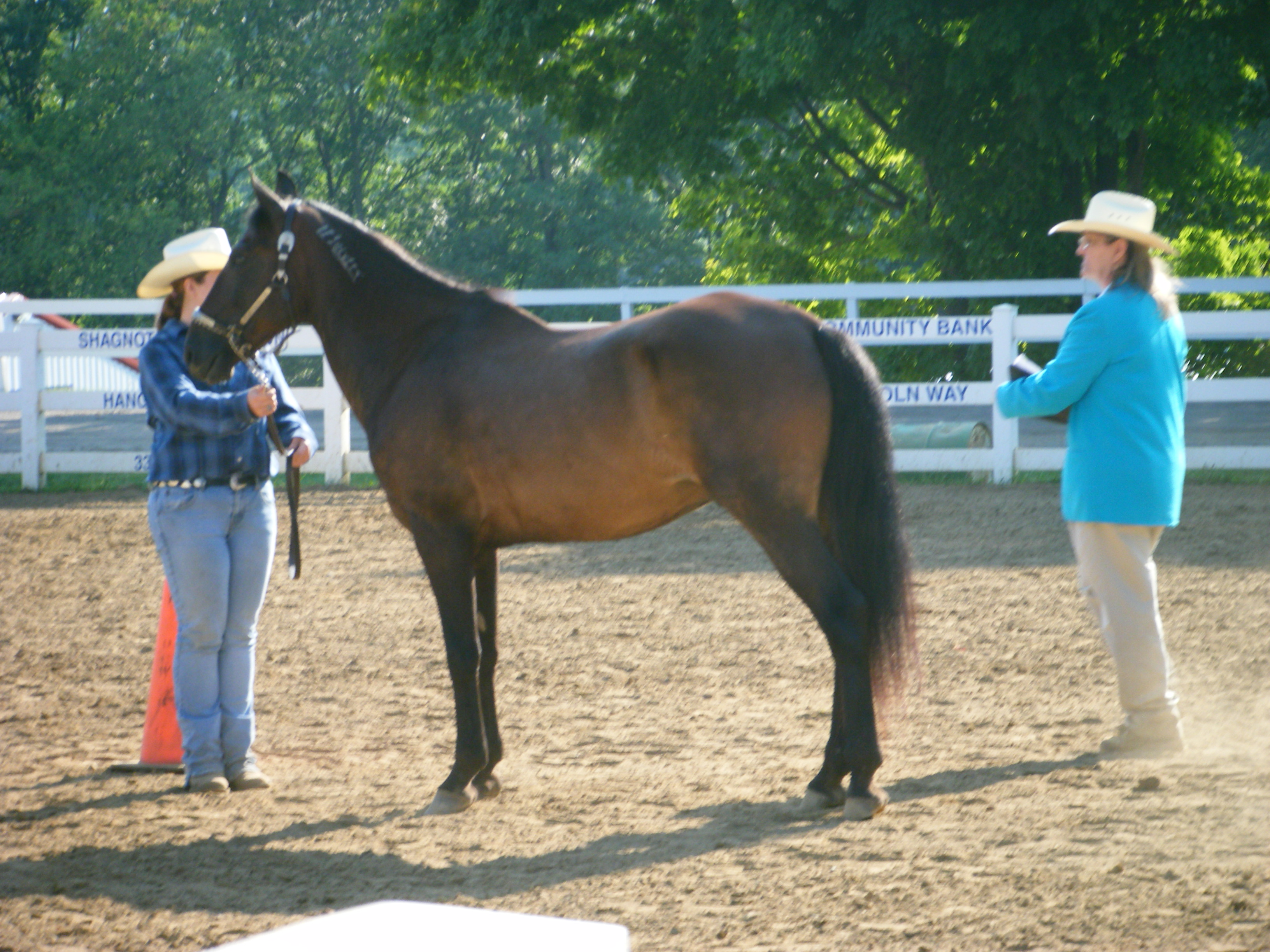Great 4-H and Trail Horse