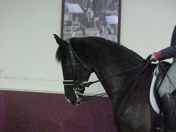 Are you looking for the horse of your DREAMS??
