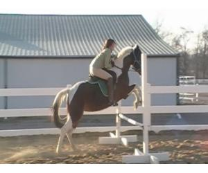 This mare can do it all, and anyone can ride her