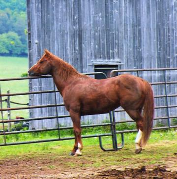 Standing at Stud in New York