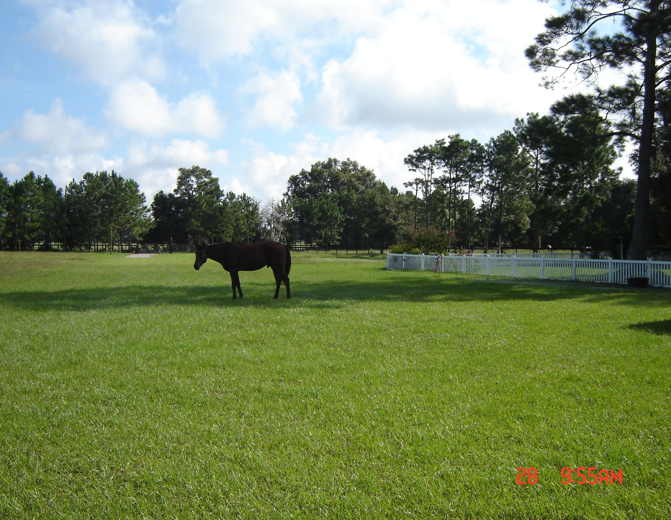 HORSE BOARDING LUSH GREEN PASTURES EXTRA LARGE STALLS