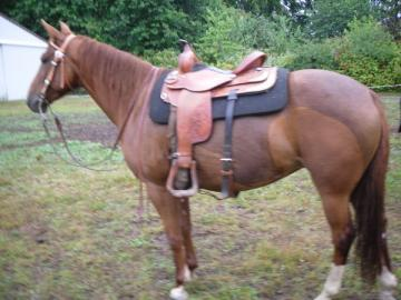 4H/WAHSET/ ALL AROUND MARE FOR SALE/TRADE