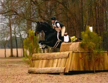 Training Level Event Horse For Sale $20,000