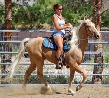 Palomino Tennessee Walking Horse For Sale