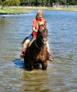 Great Trail Horses/Kid Safe