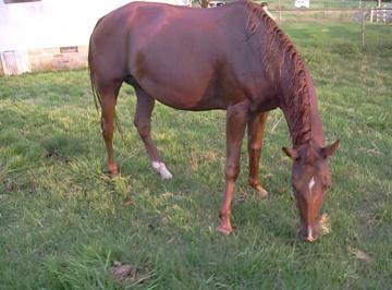 horsethumbs
