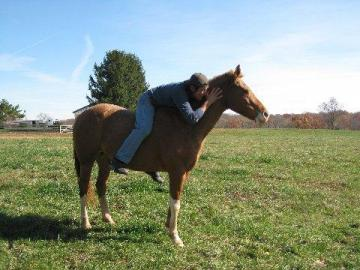 ***PERFECT MARE FOR KIDS, MUST TO SELL***