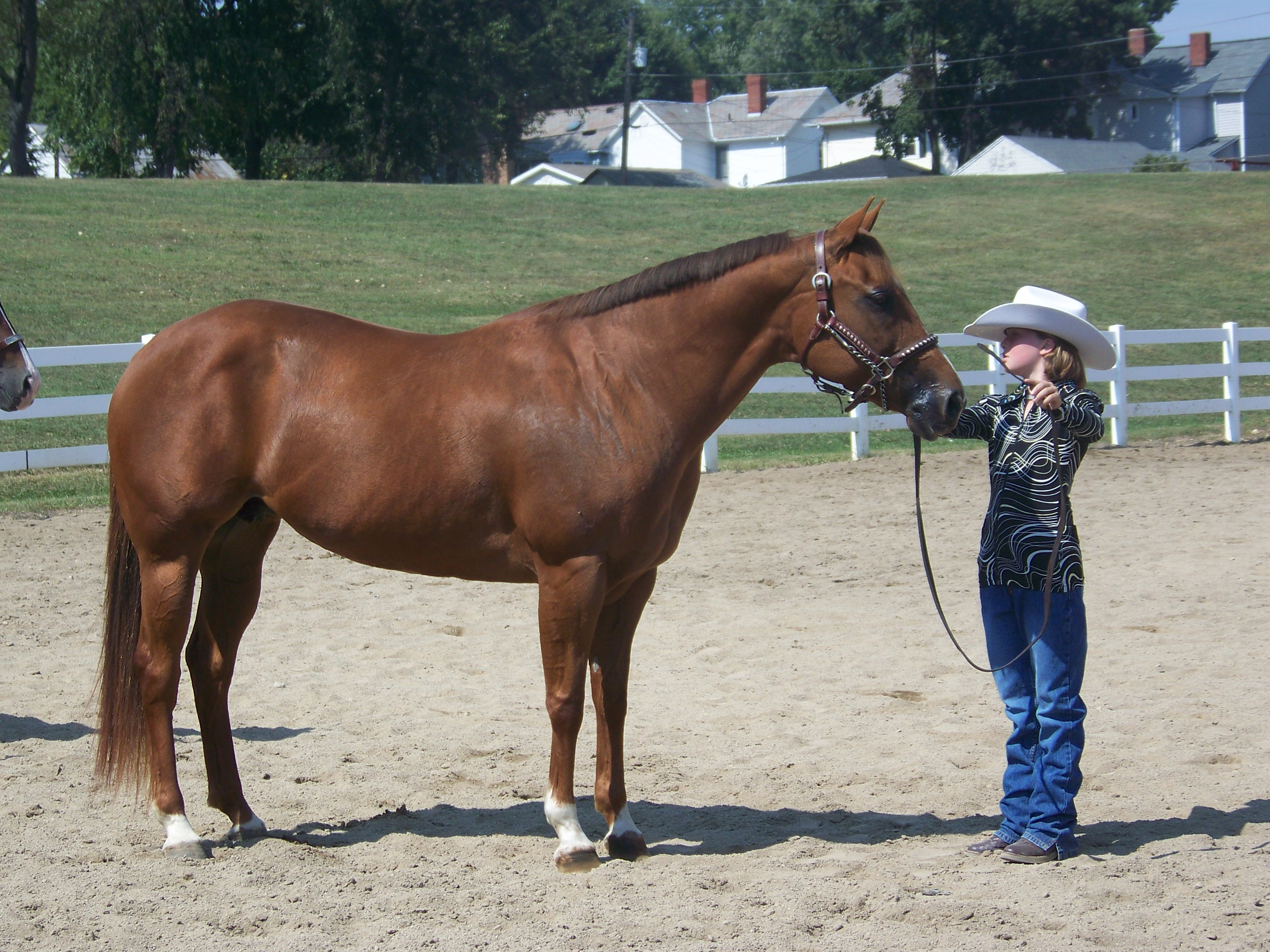 SUPER quiet AQHA mare that anyone can show at halter!!