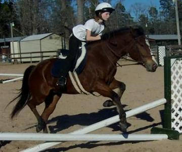 AQHA QH mare experienced hunter show pony