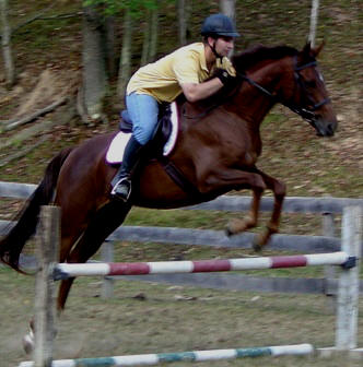 Thoroughbred gelding likes to work and jump