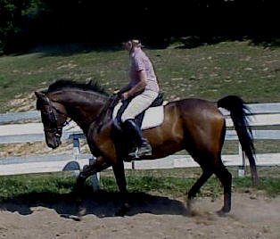 TB gelding sweet boy free to good approved home