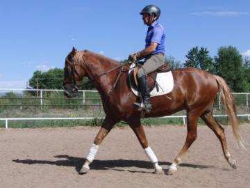 Beautiful, Flashy 6 yr. old Gelding