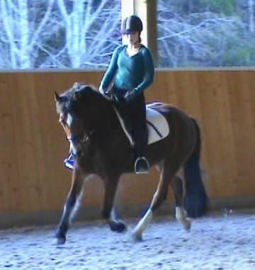 **FANCY DRESSAGE COB**