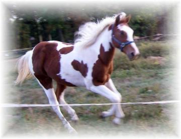 Beautiful Registered Filly! NEEDS HOME ASAP!
