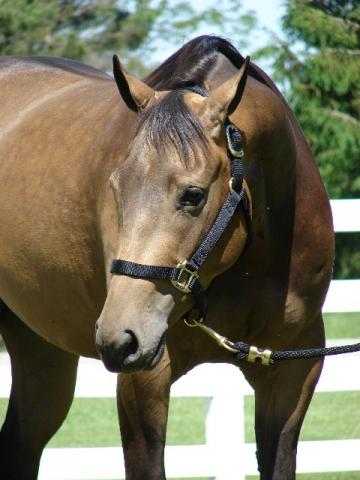 Gorgeous gelding!  Reining &/or all-around prospect!