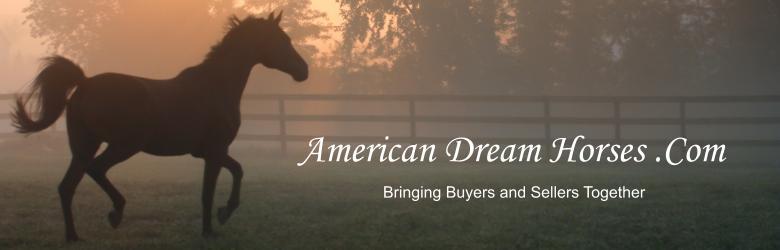 American Dream Horses .Com