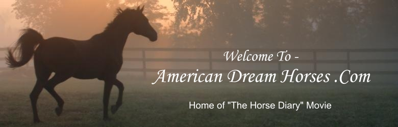 American Dream Horses .Com